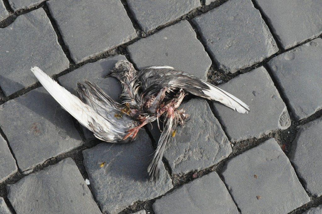 ציפור מתה